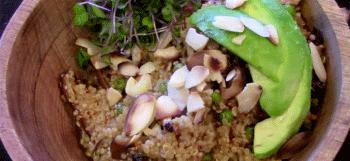 Quinoa forestier